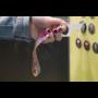 Kép 6/11 - NoTouch Wrist higiéniai kulcs